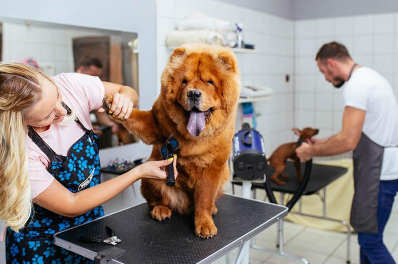 yenikent veteriner kliniği, 7/24 veteriner kliniği